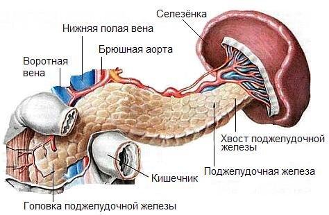 прививка гепатит можно ли при аллергии