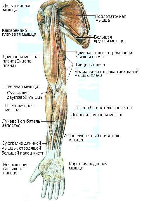 суставы болят при месячных